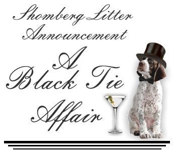 A Black Tie Affair Litter
