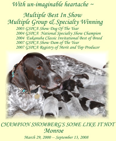 Multiple Best In Show/Multiple BISS/National Specialty Champion Champion Shomberg's Some Like It Hot ROMX